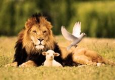 BALAK – Colombe, agneau ou lion ?