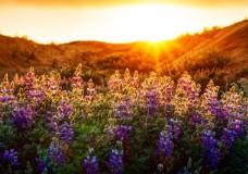 Ep.4 – La Torah commence où finit la nature